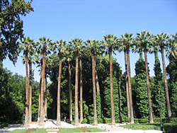 The trees in the national gardens of Athens