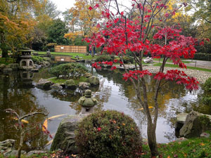 the Japanese garden - Photo from Fran Pickering