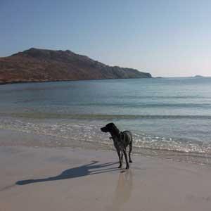 Erisky Beach -(c) Alison Baillie